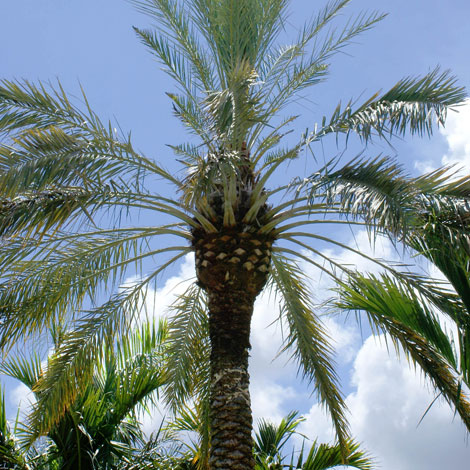 After-Royal Palm