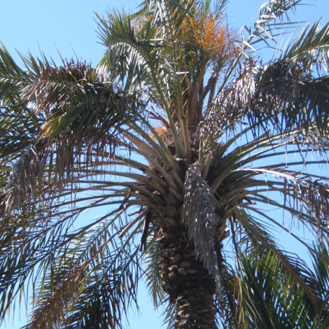 Before-Royal Palm