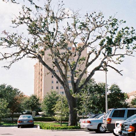 Before-Tree