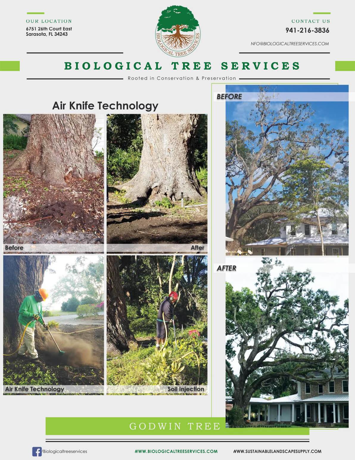 The Godwin Tree