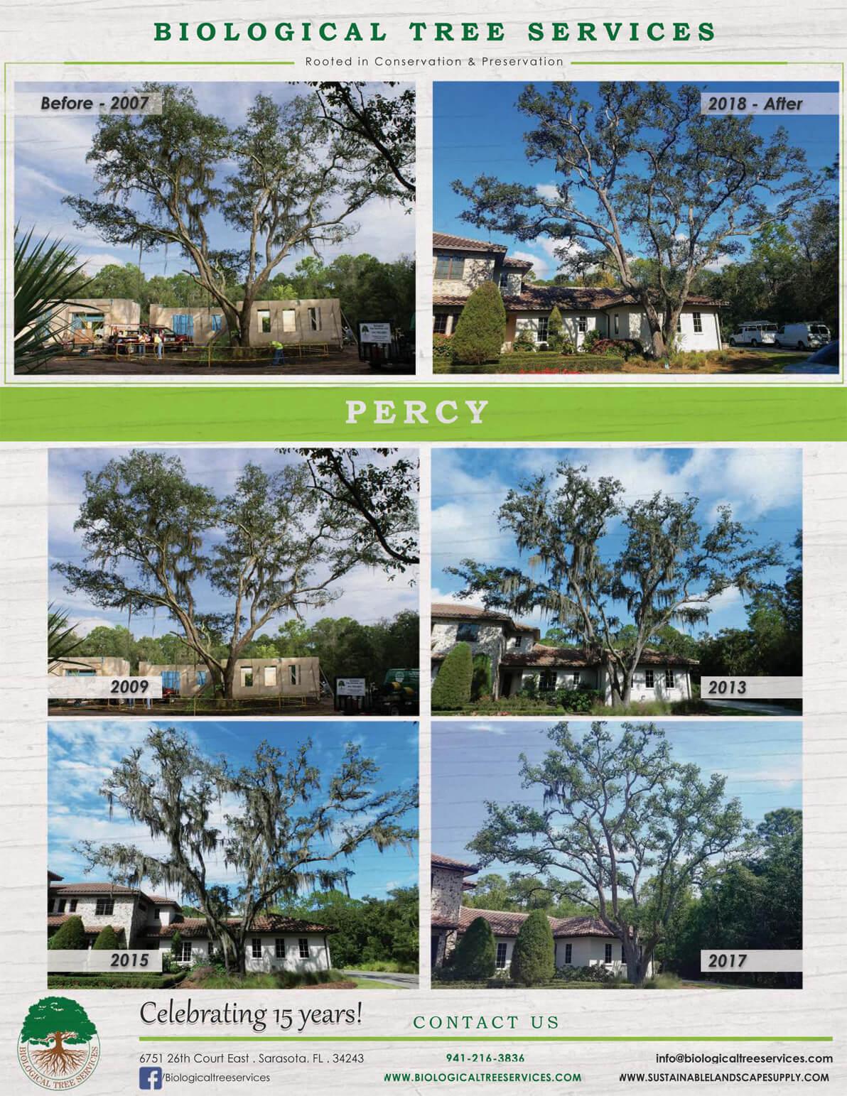 The Percy Tree