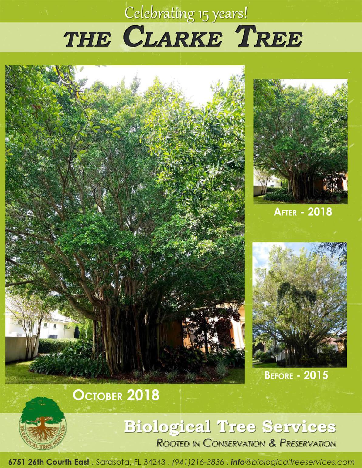 The Clarke Tree